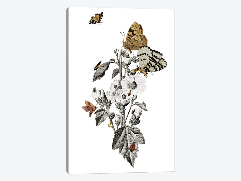 Insect Toile by Heather Landis 1-piece Canvas Art Print