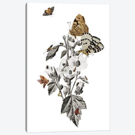 Insect Toile 3-Piece Canvas #HLA16} by Heather Landis Canvas Print