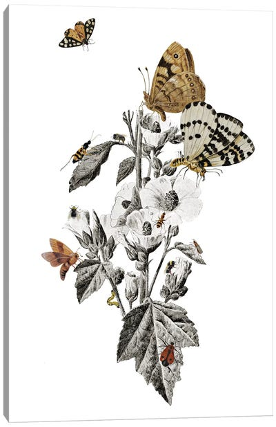 Insect Toile Canvas Art Print