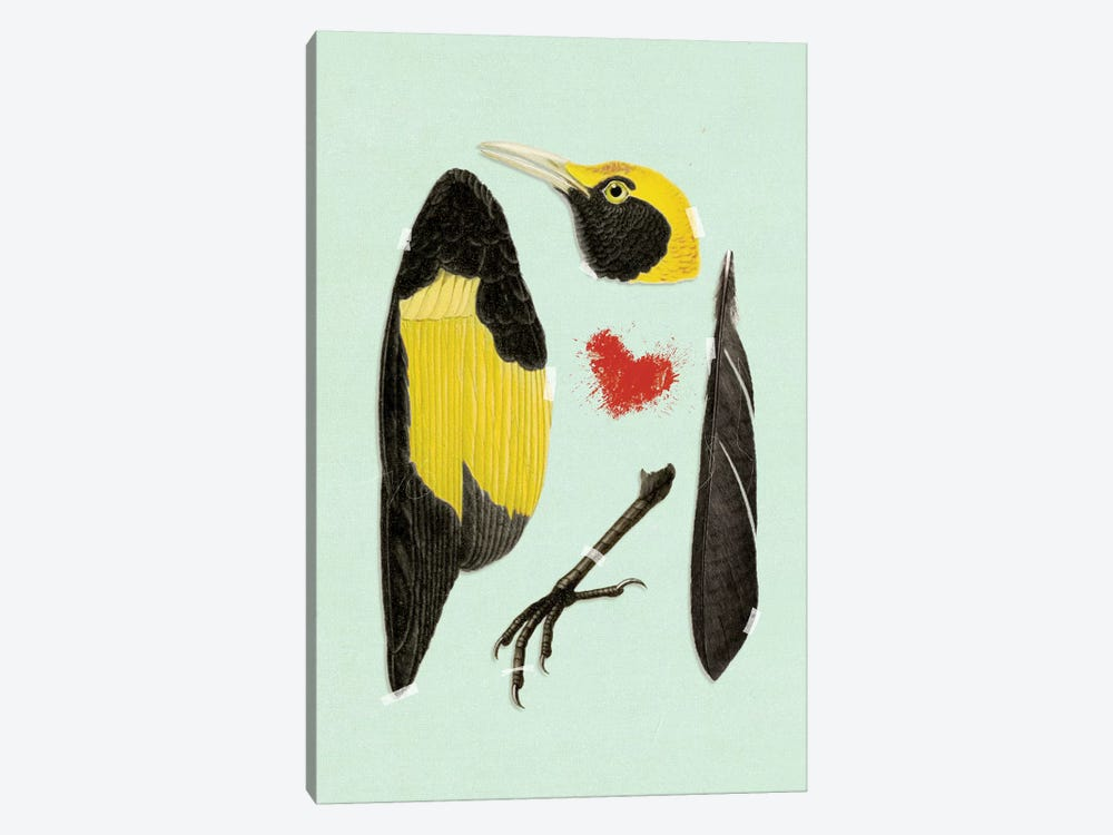 Bird by Heather Landis 1-piece Canvas Art Print
