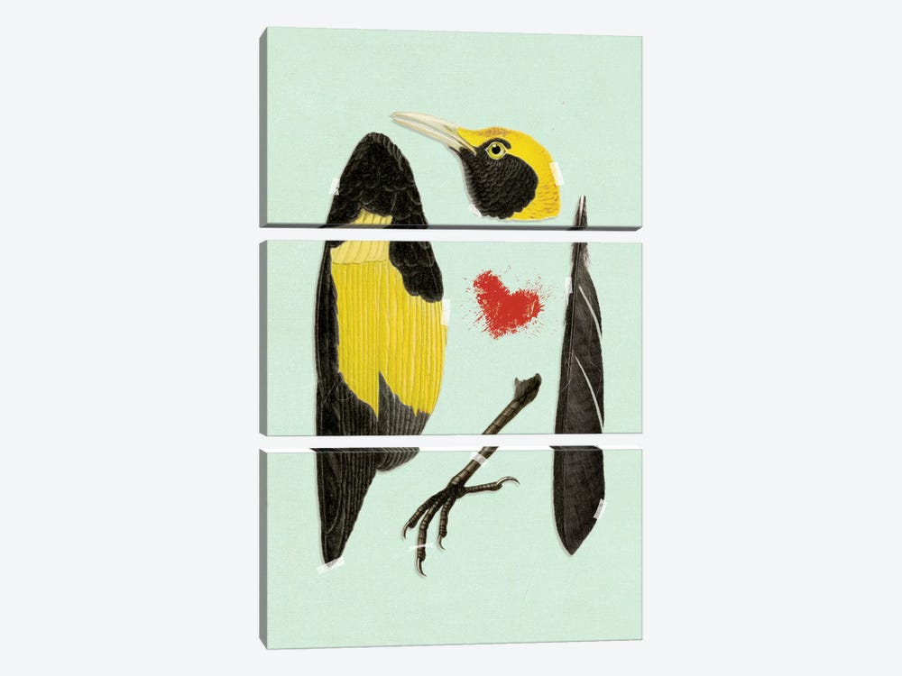 Bird by Heather Landis 3-piece Canvas Print