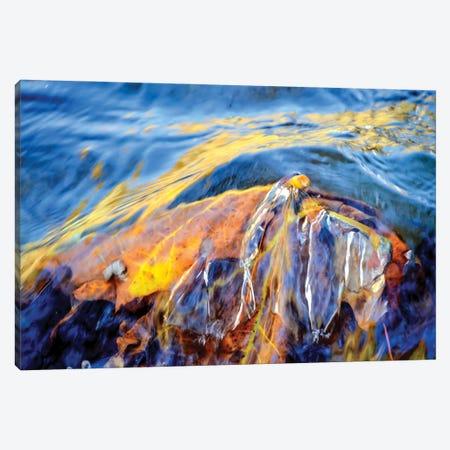 Metamorphosis Canvas Print #HLC9} by Helena Cooper Canvas Print