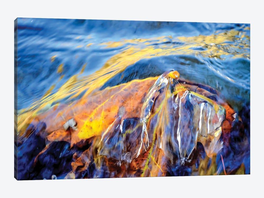 Metamorphosis by Helena Cooper 1-piece Canvas Art
