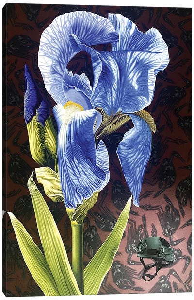 Iris Crisis Canvas Art Print