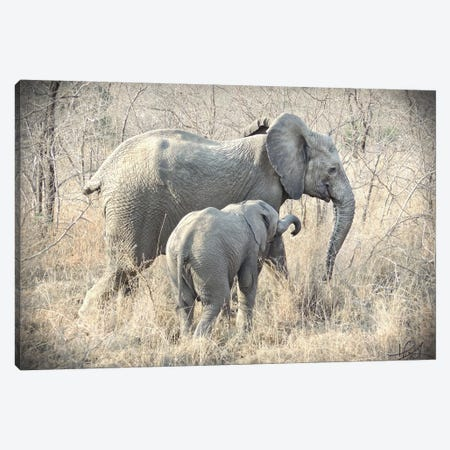 Elephants Canvas Print #HLN1} by Helene Sobol Canvas Wall Art