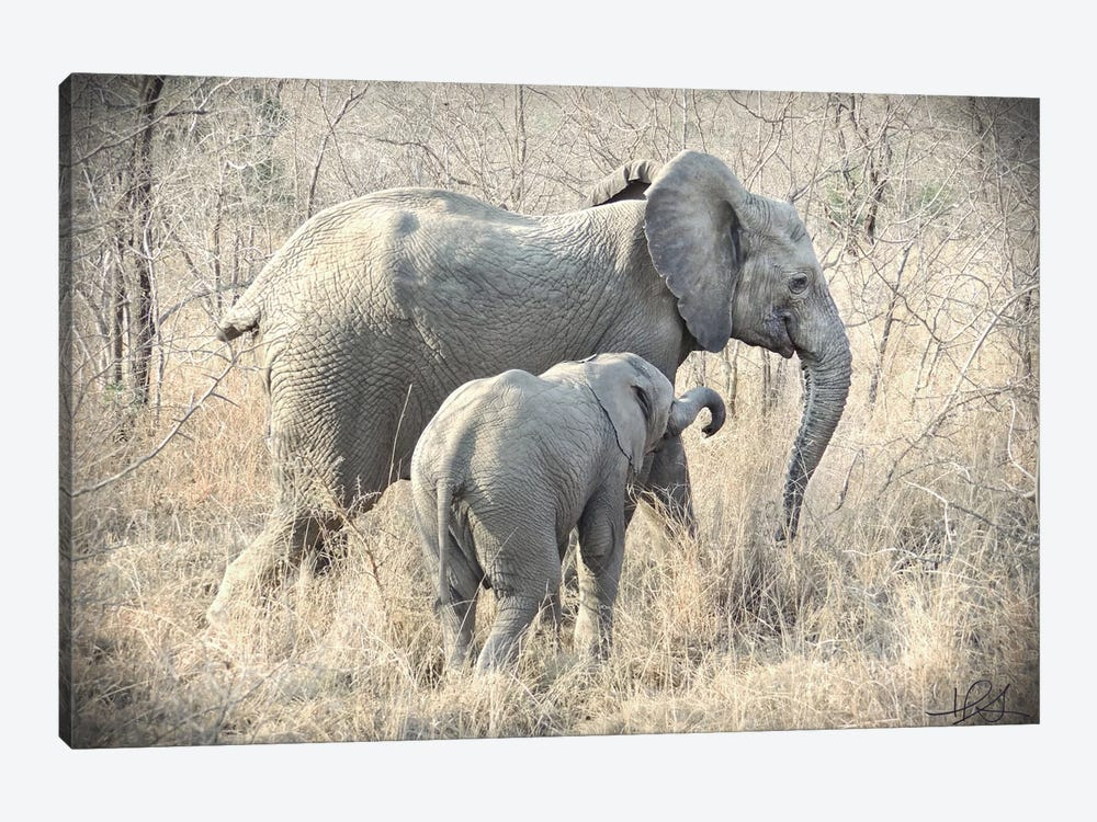 Elephants by Helene Sobol 1-piece Canvas Art Print