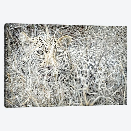 Leopard Canvas Print #HLN2} by Helene Sobol Canvas Artwork