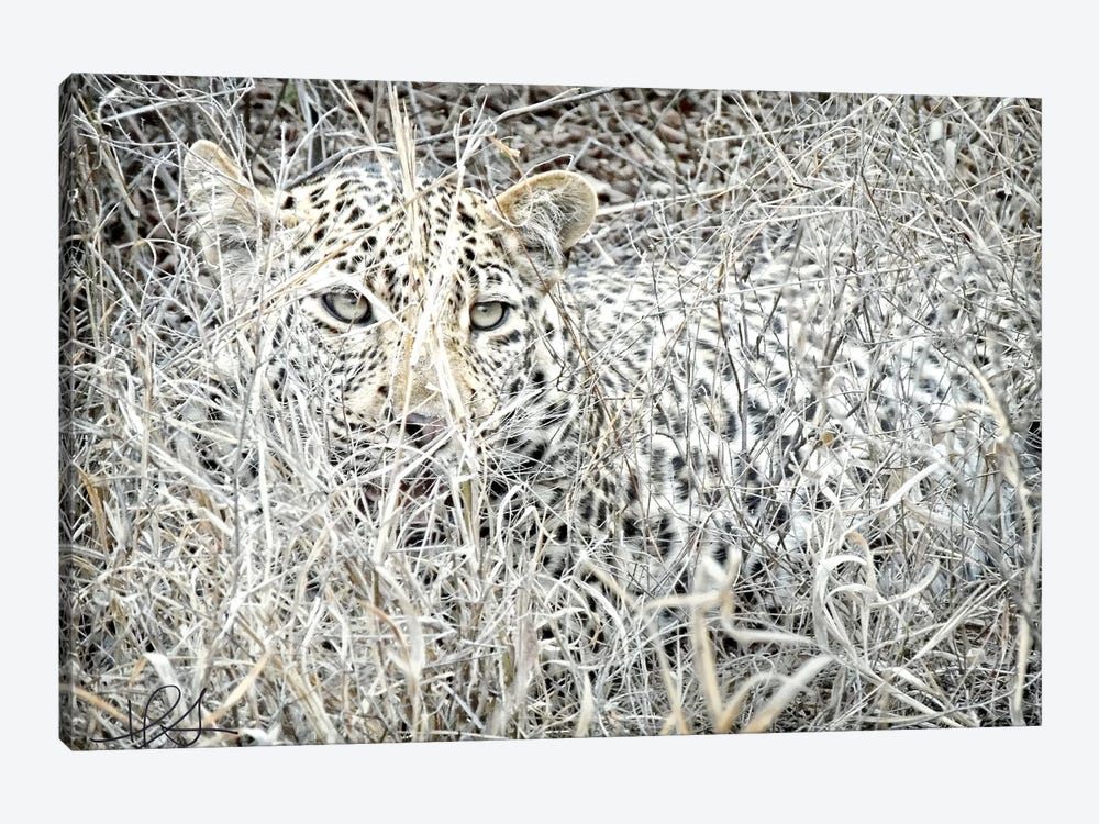 Leopard by Helene Sobol 1-piece Canvas Artwork
