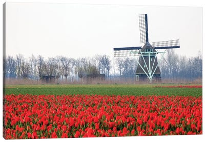 Netherlands, Old wooden windmill in a field of red tulips Canvas Art Print