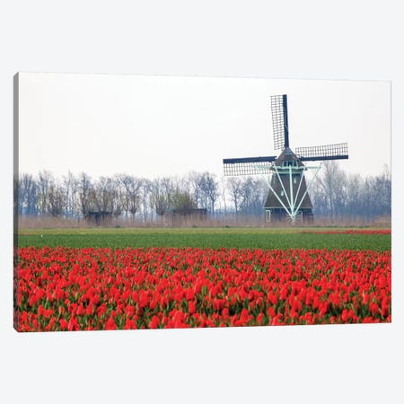 Netherlands, Old wooden windmill in a field of red tulips Canvas Print #HLO11} by Hollice Looney Canvas Wall Art