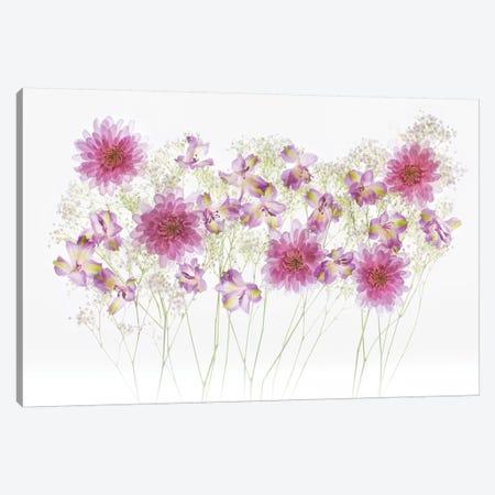 USA, Florida. Floral bounty I Canvas Print #HLO16} by Hollice Looney Canvas Art Print