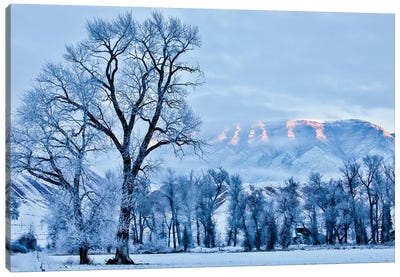 USA, Wyoming, Shell, Hoar Frost in the Valley  Canvas Art Print