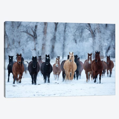 USA, Wyoming, Shell, Horses in the Cold  3-Piece Canvas #HLO41} by Hollice Looney Art Print