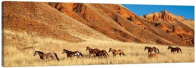 Wyoming, Shell, Horses Running  Canvas Art Print