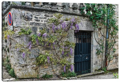 France, Cajarc. Wisteria covered stone wall and doorway. Canvas Art Print