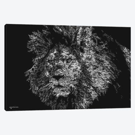 Big 5 Collection - Lion Canvas Print #HMI100} by Johan Marais Canvas Art