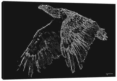 Line Art American Bald Eagle Canvas Art Print