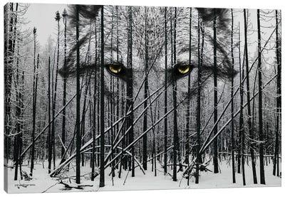 Wolf Winter Woods Canvas Art Print
