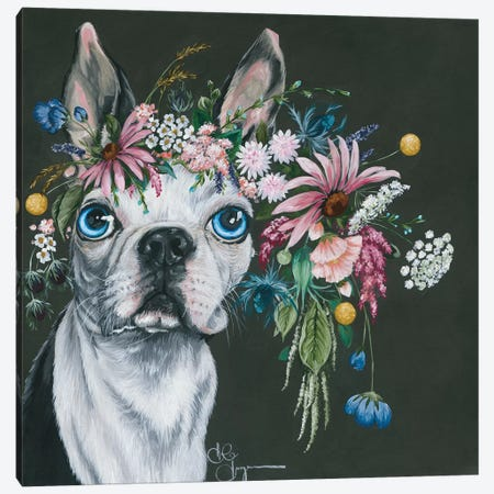 Boston Terrier Canvas Print #HOA3} by Hollihocks Art Canvas Artwork