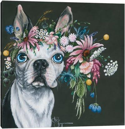 Boston Terrier Canvas Art Print