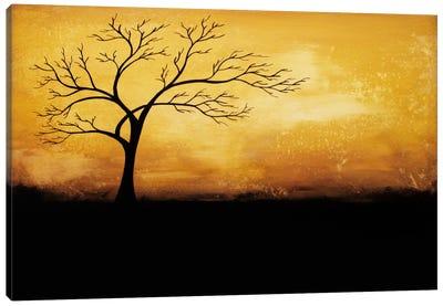 Morning Glory Canvas Print #HOD171