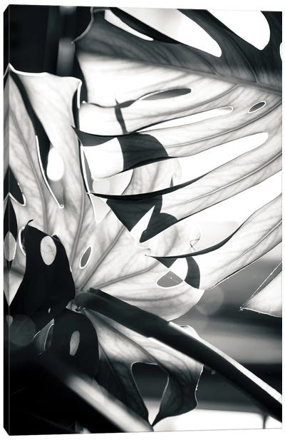 Mono Leaves Canvas Art Print