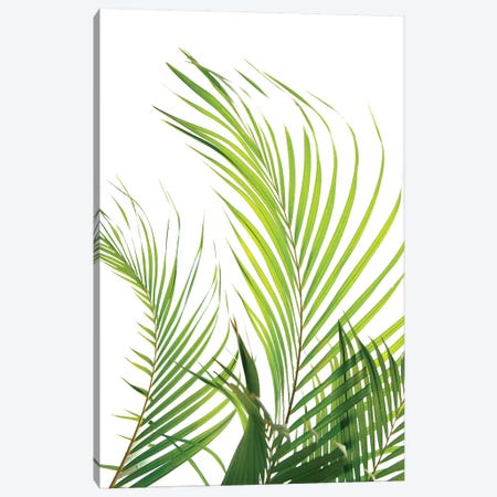 Palm Fronds Canvas Print #HON193} by Honeymoon Hotel Canvas Art