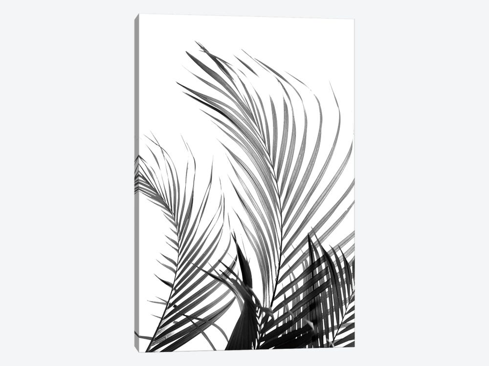 Palm Fronds (Black & White) by Honeymoon Hotel 1-piece Canvas Artwork