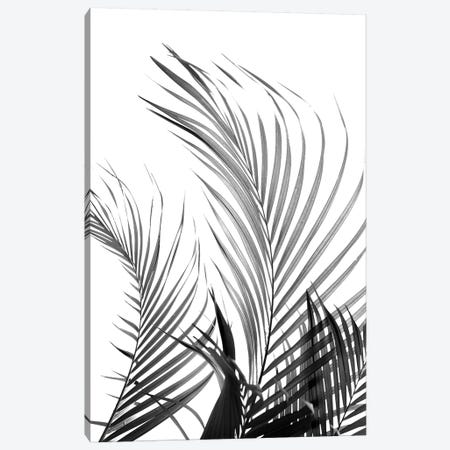 Palm Fronds (Black & White) Canvas Print #HON194} by Honeymoon Hotel Canvas Art Print