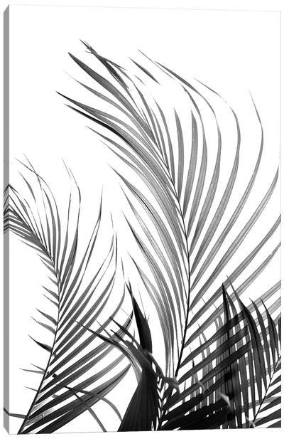 Palm Fronds (Black & White) Canvas Art Print