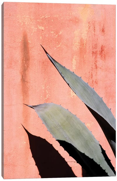 Peach Cactus Canvas Art Print