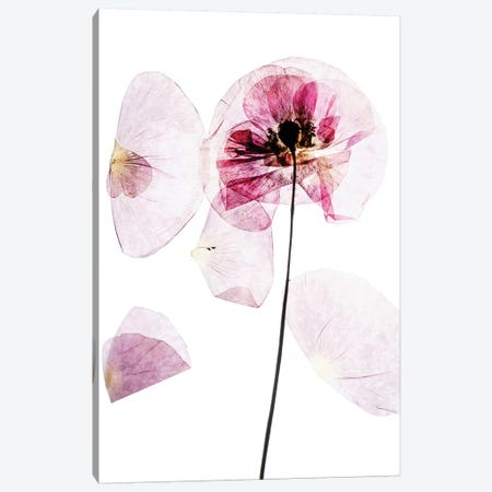 Poppy Fields Canvas Print #HON215} by Honeymoon Hotel Canvas Wall Art