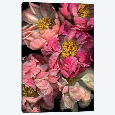 Pressed And Pretty Canvas Print #HON216} by Honeymoon Hotel Canvas Artwork