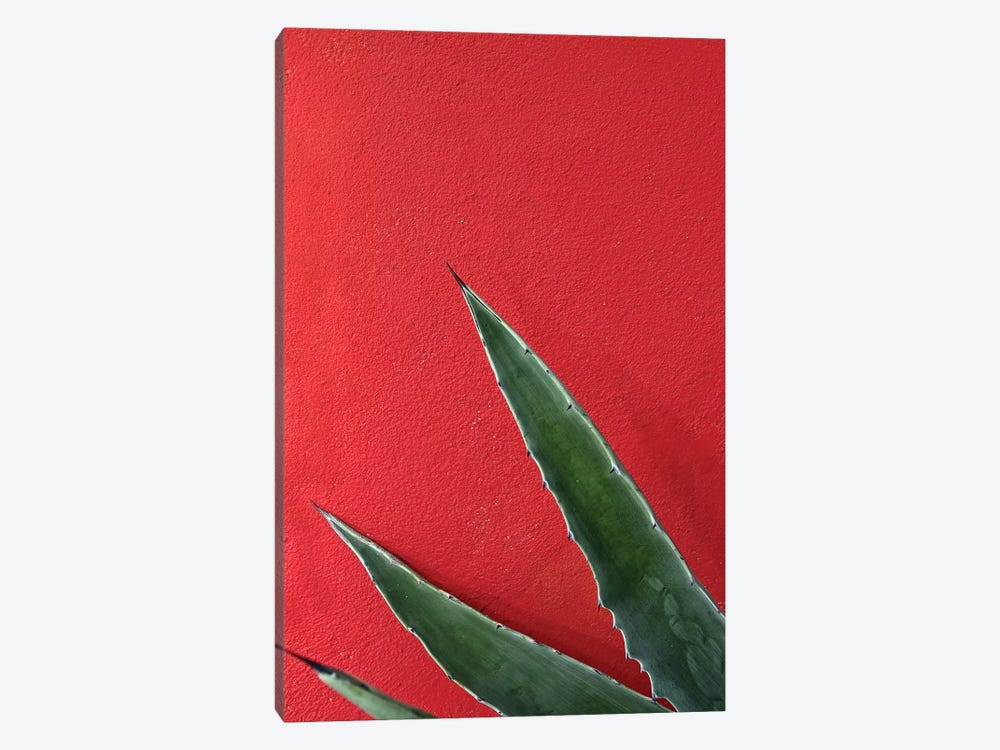Ruby Agave by Honeymoon Hotel 1-piece Canvas Artwork