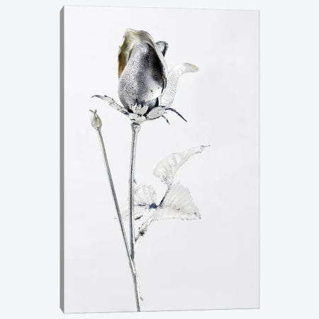 Saturn's Rose Canvas Print #HON223} by Honeymoon Hotel Canvas Wall Art