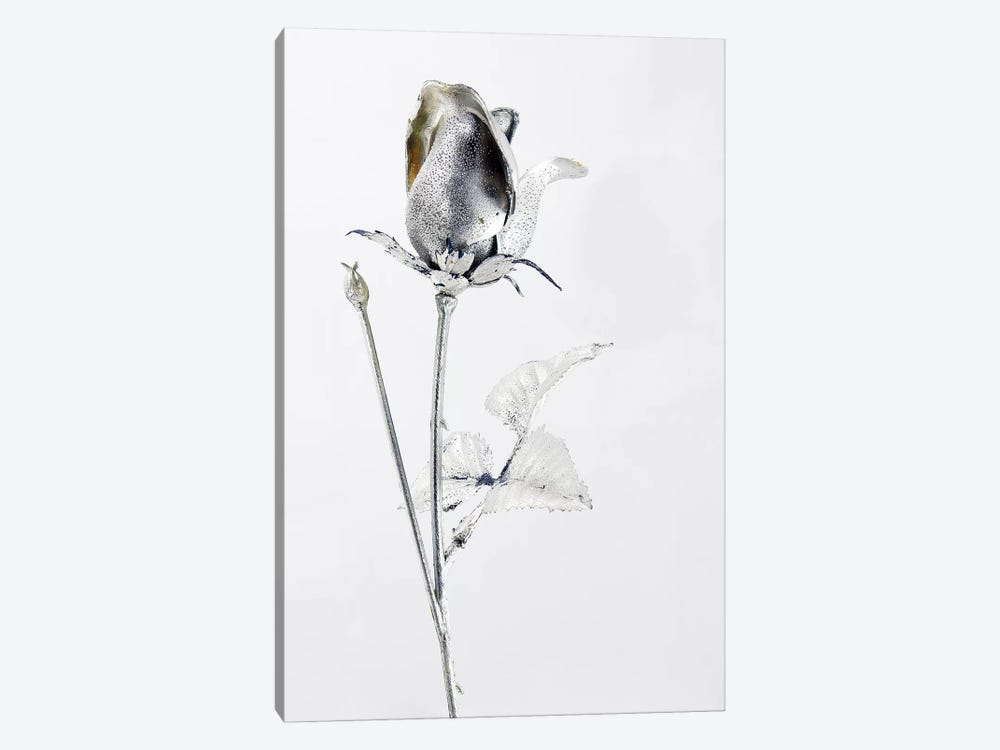 Saturn's Rose by Honeymoon Hotel 1-piece Canvas Artwork