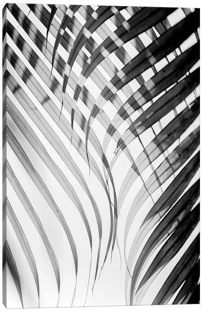 Tropical Curtain Canvas Art Print