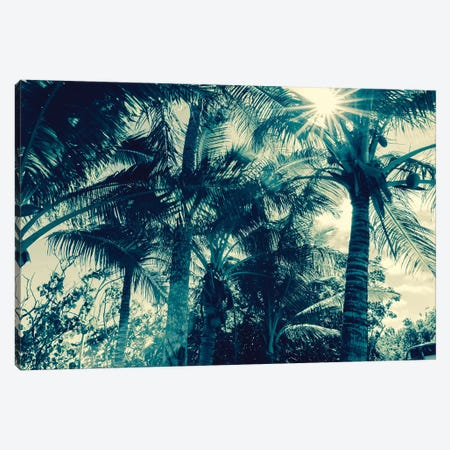 Coconut Palms Canvas Print #HON294} by Honeymoon Hotel Canvas Artwork