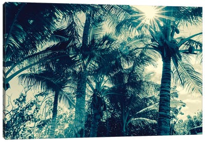Coconut Palms Canvas Art Print