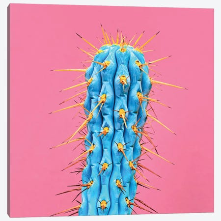 Ultraviot Cactus Canvas Print #HON319} by Honeymoon Hotel Canvas Artwork