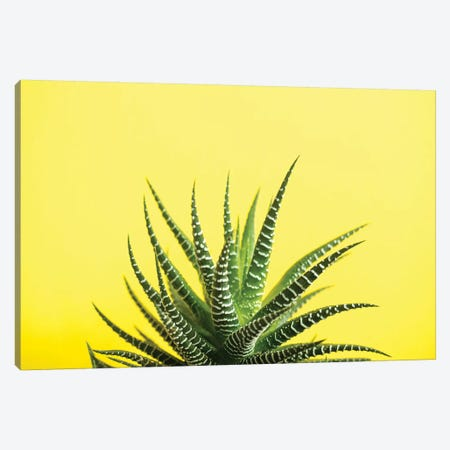 Yellow Canvas Print #HON321} by Honeymoon Hotel Canvas Print