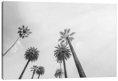 8 Palms Canvas Art Print