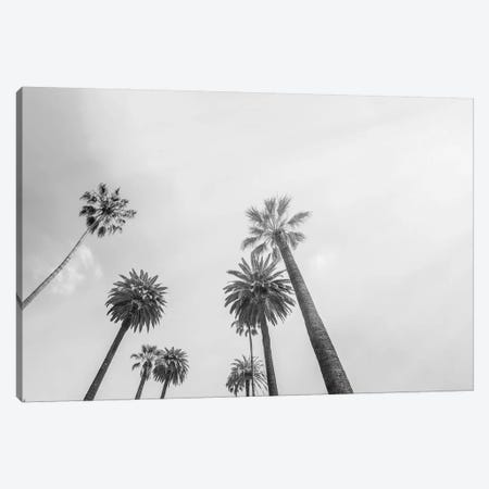 8 Palms Canvas Print #HON333} by Honeymoon Hotel Canvas Wall Art
