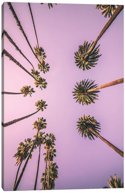 Palm Boulevard Canvas Art Print