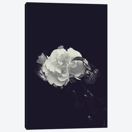 Dutch Rose Canvas Print #HON80} by Honeymoon Hotel Canvas Art
