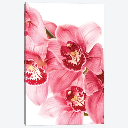 Floral Canvas Print #HON90} by Honeymoon Hotel Canvas Print