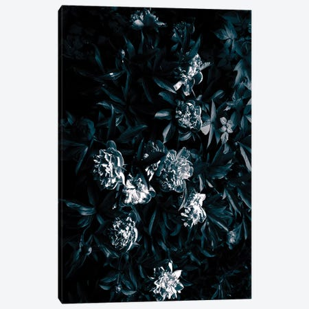 Florals After Dark Canvas Print #HON91} by Honeymoon Hotel Art Print