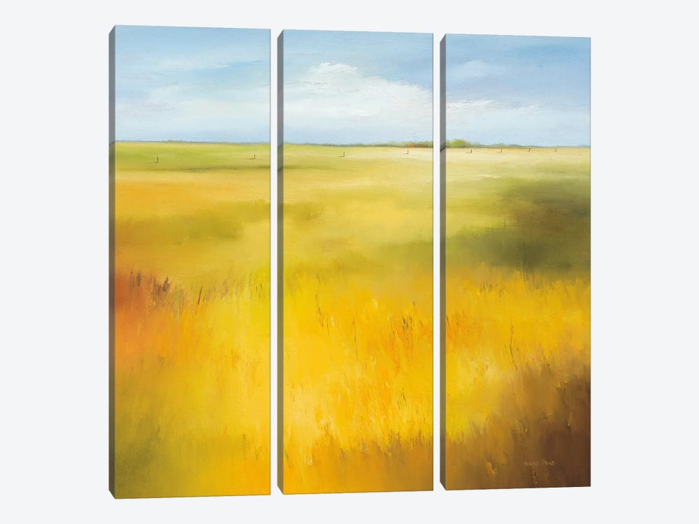 Yellow Field I by Hans Paus 3-piece Canvas Art