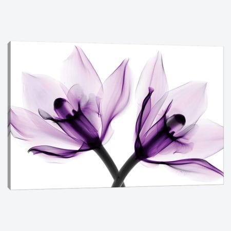 Orchids I Canvas Print #HPH11} by Hong Pham Canvas Artwork