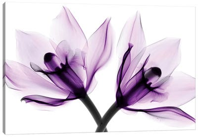 Orchids I Canvas Art Print